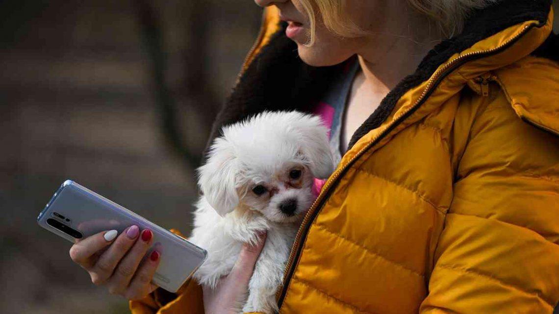 Tienda de animales online  ¿Como elegir productos para tu mascota?